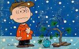 Charlie_brown_norfolk_pine